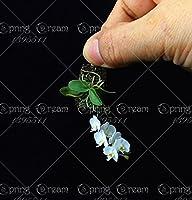 11.11 100個の珍しい胡蝶蘭の盆栽の花の種、家の庭のための珍しい盆栽の花の種植物