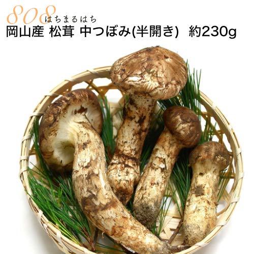 国産 松茸 中つぼみ(半開き) 小さめ 約230g 2〜8本程度入 まつたけ マツタケ 岡山 利平栗1kgオマケ付き