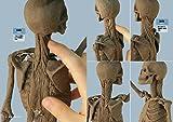 立体像で理解する美術解剖 画像