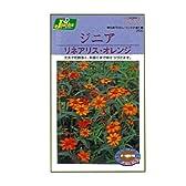 カネコ種苗 園芸・種 KS200シリーズ ジニア リネアリス・オレンジ 草花200 256