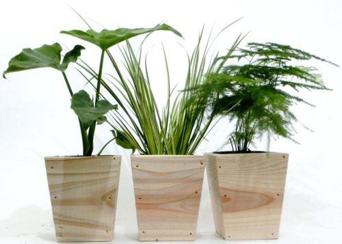 木鉢3寸ミニ観葉3点セット-セローム、セキショウ、アスパラ