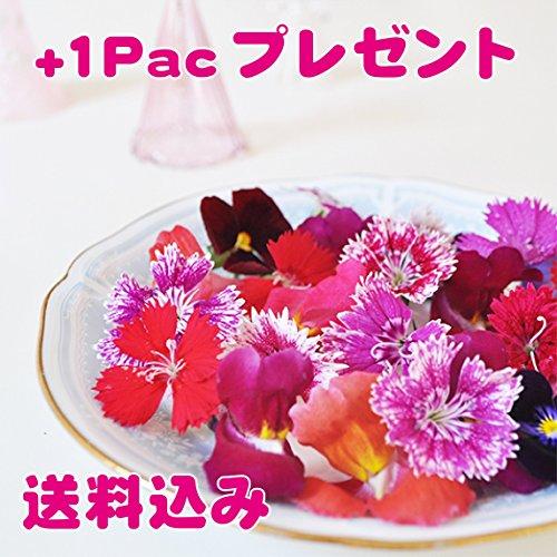 食べるお花 〜Red & Purple 無農薬バラエティフラワー~