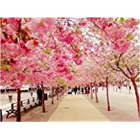 Diy oil painting, paint by number kit- Romantic Road 16*20 inch. by Colour Talk [並行輸入品]