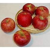 青森・長野産 紅玉リンゴ こうぎょくりんご 5kg 小玉23~25個入り