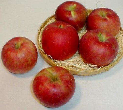 青森・長野産 紅玉リンゴ こうぎょくりんご 約5kg 小玉23〜25個入り ご家庭用