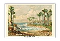パルミラのヤシの木(トディの手のひら) - スリランカ(セイロン) - ビンテージな植物のイラスト によって作成された エルンスト・ヘイン c.1889 - アートポスター - 33cm x 48cm
