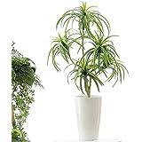 空気清浄 花粉除去 消臭 脱臭 プレミアム光触媒 銀配合酸化チタン 人工 観葉植物 フェイクグリーン「リアル ドラセナ…
