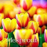2pcsTrue混色(盆栽)は、バラエティ新鮮な球根の根は良い品質を編(S)13