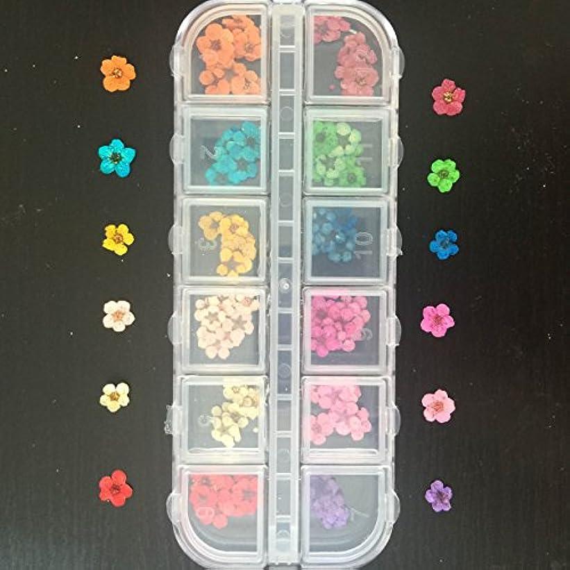 デコラティブ大いに想像するドライフラワー上質押し花120枚ケース入 ネイル&レジンアート用12色×各10枚