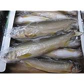 冷凍  鮎 10~12尾入 1kg