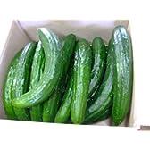 きゅうり 規格外お得3kg (目安本数25-35本) 収穫日に農家直送 九州,宮崎県西都市産