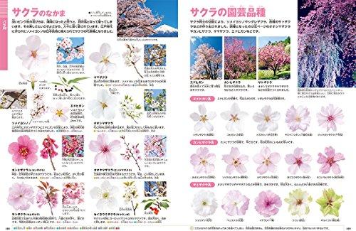 小学館の図鑑『NEO花』
