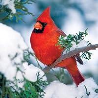 Buffalo Gamesオーデュボン鳥、冬Cardinal–500pcジグソーパズル