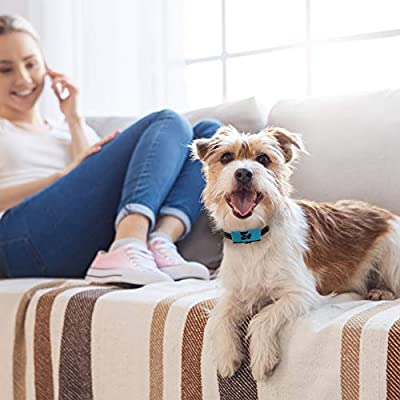 Rechargeable Bark Collar Small Dog to Medium Dog - Non Shock No Bark Device, Pain-Free, Safe, Ultrasonic Vibration - Dog Training Collars for Barking and Behaviour - with USB Cord and Colourful Tags
