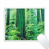 カナダ、バンクーバー島。このダグラス・ファーの木は600年以上も経っています。 PC Mouse Pad パソコン マウスパッド