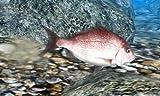 「Fish Eyes 3D (フィッシュアイズ3D)」の関連画像