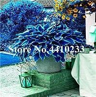 昇進!150個美しいホスタ盆栽、多年生リリーフラワーシェード、ホスタフラワーグラス盆栽、オーナメントガーデンシードソープスーツ:私
