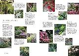 Yoseue Plants 寄せ植えに使いたい、12ヶ月の草花 画像