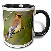 3drose Danita Delimont–鳥–ワシントン、湖Sammamish、Cedar Waxwing Bird–us48glu0129–Gary Luhm–マグカップ 11-oz Two-Tone Black Mug mug_95658_4