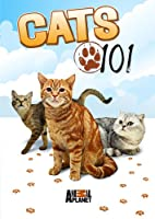 Cats 101 [DVD] [Import]