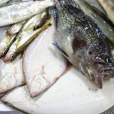 北海道産 鮮魚セット 2kg
