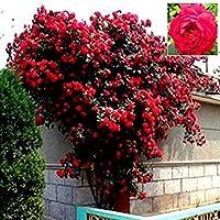6ピース、オリジナル包装ミニ盆栽植物鉢植え草人形、6表現髪草人形、ポットと種子で、オフィスミニ植物