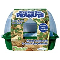 DuneCraft Sprout 'n Grow Greenhouses Peanuts by Dunecraft [並行輸入品]
