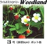 いちご苗・ワイルドストロベリー 森の苺WOODLAND (直径9cmポット苗)3ポットセット