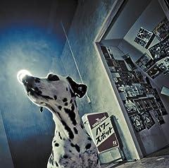 serial TV drama「Overslept Kills The Day Feat. OKD」のジャケット画像