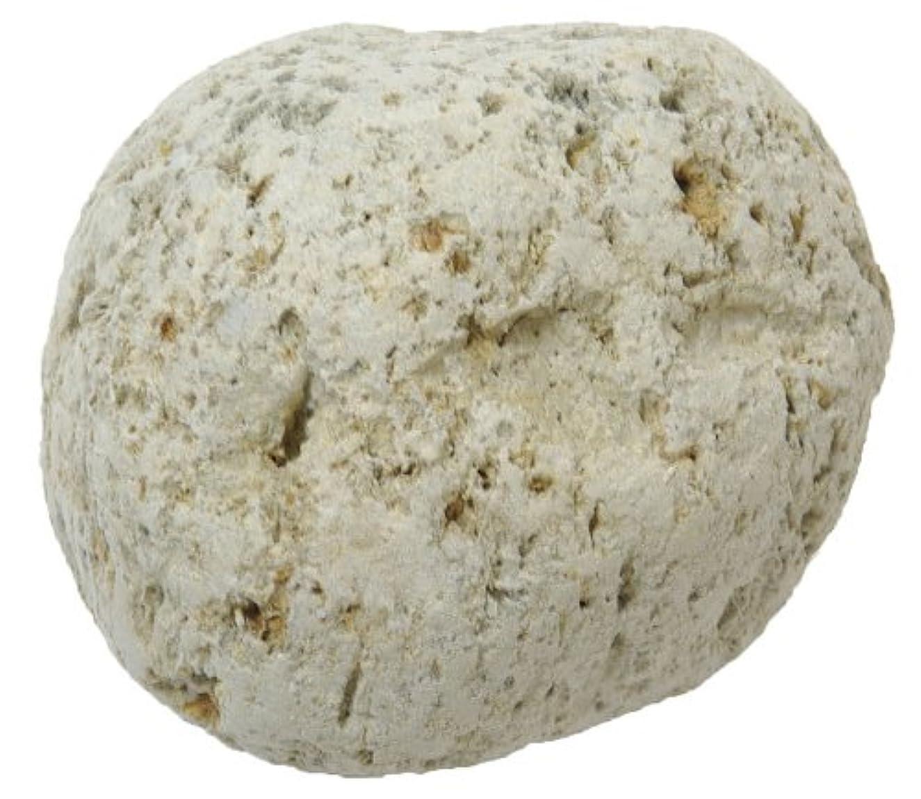 切るクラシカル豚原石軽石