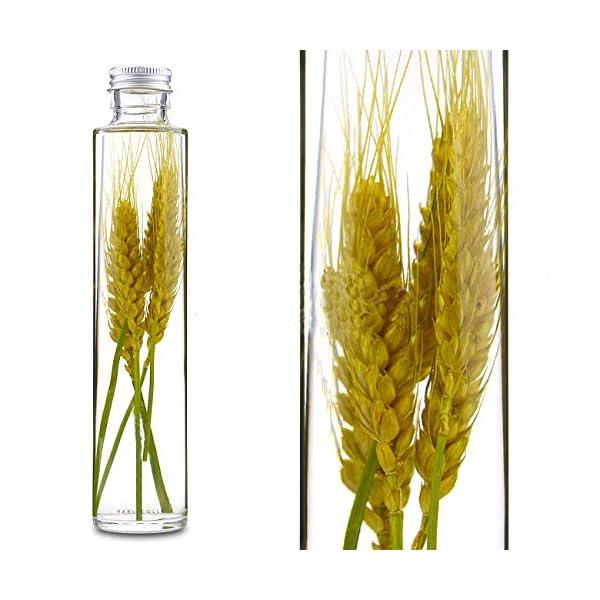 Lulus ハーバリウム 小麦 ドライフラワー ...の商品画像
