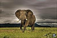 African Majesty Elephant 36x 24写真アートプリントポスター