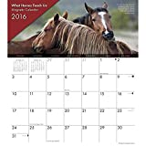 Horses What Horses Teach Us Magnetic 2016 Wall Calendar by Willow Creek Press [並行輸入品]