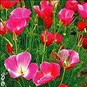 【メール便配送】国華園 花たね カリフォルニアポピー ピンク 1袋(500mg)【※発送が国華園からの場合のみ正規品です】