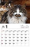 ボス猫カレンダー2018 ([カレンダー]) 画像