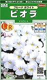 サカタのタネ 実咲花6705 ビオラ フルーナ ホワイト 00906705