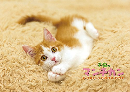 子猫のマンチカン 2018年 カレンダー 壁掛け 51×36cm