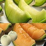 お中元 ギフト フルーツ 果物 アンデス&クインシーのメロン食べ比べセット