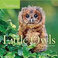 Audubon Little Owls 2020 Calendar
