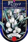 【BULB PLANT】Tulip Species polychroma 原種チューリップ・ポリクローマ・ポット苗
