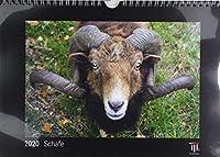 Schafe 2020 - Black Edition - Timokrates Kalender, Wandkalender, Bildkalender - DIN A4 (ca. 30 x 21 cm)