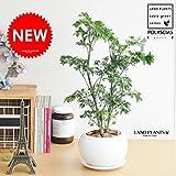 LAND PLANTS ポリシャス 白色丸型陶器鉢