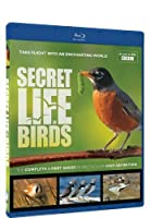 Secret Life of Birds [Blu-ray] [Import]