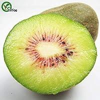 1:100個/バッグキウイ種子高生存率盆栽フルーツ種子用ホームガーデン盆栽フラワー種子G009