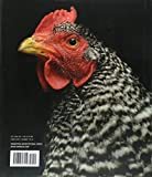 Radiant: Farm Animals Up Close and Personal (Farm Animal Photography Book) 画像
