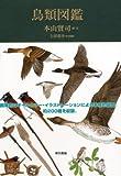 鳥類図鑑 画像