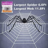 Pawliss Halloween 11.8 Ft Round Spider Web with 6.6 Ft Spider Scary Giant Spider Halloween Decor Decorations Outdoor Yard White Web [並行輸入品]