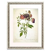 ピエール=ジョゼフ・ルドゥーテ Pierre Joseph Redoute 「Rose / (Rosa indica subviolacea)」 額装アート作品