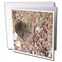 Sand Dollar and Shells Beach in Oman Rhonda Albom - Greeting Card 6 x 6 inches single (gc_164781_5) [並行輸入品]