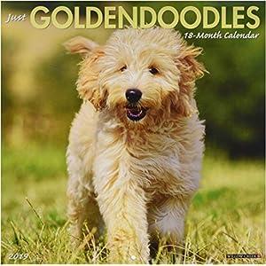Just Goldendoodles 2019 Calendar